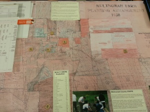 A pink map showing farm planting arrangements.